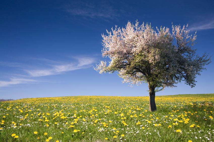 The Health Benefits of Dandelions