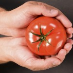 Why Grocery Store Tomatoes Taste Bland